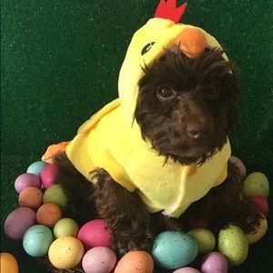 Size M Dog Chicky Costume